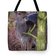 Fallow Deer Fawn Tote Bag