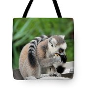 Family Of Lemurs Tote Bag