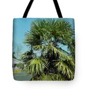 Fan Palm Tree Tote Bag