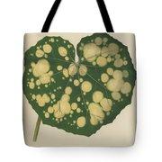 Farfugium Grande  Leopard Plant, Green Leopard Plant Tote Bag