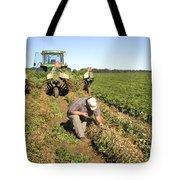 Farmer Inspects Peanut Field Tote Bag