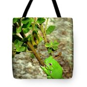 Fat Frog Tote Bag