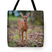 Fawn In Woods At Shiloh National Military Park Tote Bag