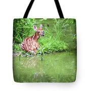 Fawn White Tailed Deer Wildlife Tote Bag