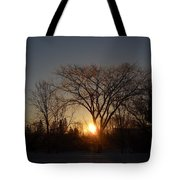 February Sunrise Behind Elm Tree Tote Bag
