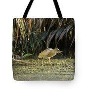 Feeding Squacco Heron Tote Bag