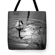 Feeding Trumpeter Swan In Black And White Tote Bag