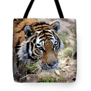 Feline Focus Tote Bag