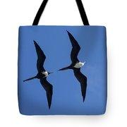 Female And Juvenile Magificent Frigatebird Fregata Magnificens 2 Tote Bag