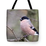 Female Bullfinch Tote Bag
