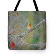 Female Cardinal And Friends Tote Bag