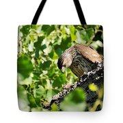 Female Cooper's Hawk Feeding Tote Bag