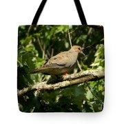 Female Dove Resting On Limb Tote Bag