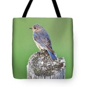 Female Eastern Bluebird 4479 Tote Bag