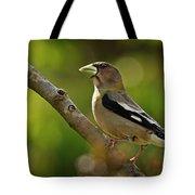 Female Evening Grosbeak - 365-55 Tote Bag