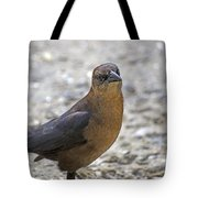 Female Grackle With Attitude Tote Bag