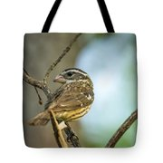 Female Grossbeak Looking Back Tote Bag