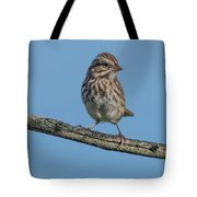 Female House Finch Resting Tote Bag