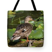 Female Mallard Among Lily Pads Tote Bag