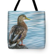 Female Mallard At The River Tote Bag
