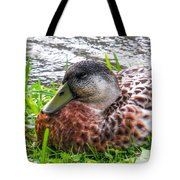 Female Mallard Duck Resting 4 Tote Bag