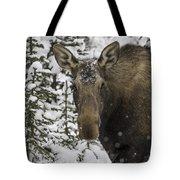 Female Moose In A Winter Wonderland Tote Bag