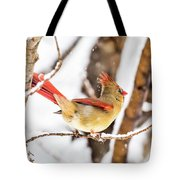 Female Northern Cardinal In The Snow Tote Bag