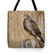 Female Northern Harrier Standing On One Leg Tote Bag