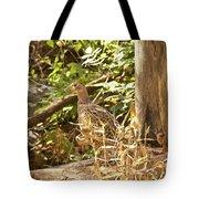 Female Ring-necked Pheasant - Phasianus Colchicus Tote Bag