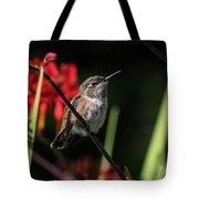 Female Rufous Hummingbird Tote Bag