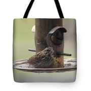 Female Sparrow On Birdfeeder Tote Bag