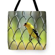 Fence And Feathers Tote Bag