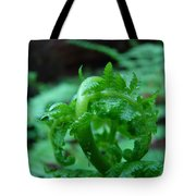 Fern Art Prints Green Forest Ferns Giclee Baslee Troutman Tote Bag