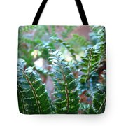 Fern Art Prints Green Sunlit Forest Ferns Giclee Baslee Troutman Tote Bag