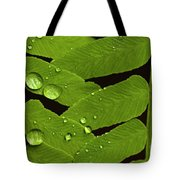 Fern Close-up With Water Droplets  Tote Bag
