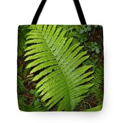 Fern Leaf In June Tote Bag
