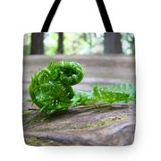 Fern On Big Redwood Tree Art Prints Baslee Troutman Tote Bag