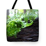 Fern On Redwood Tree Art Print Baslee Troutman Tote Bag