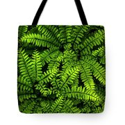 Ferns After The Rain Tote Bag