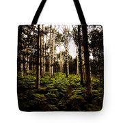 Ferns And Aspen Tote Bag