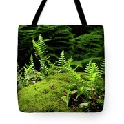 Ferns And Moss On The Ma At Tote Bag