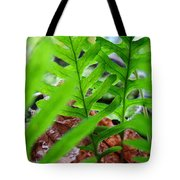 Ferns Art Prints Forest Ferns Giclee Art Prints Basle Troutman Tote Bag