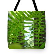 Ferns Green Redwood Forest Fern Giclee Art Prints Baslee Troutman Tote Bag