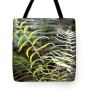 Ferns In Natural Light Tote Bag