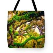 Ferns On Florida Oaks Tote Bag