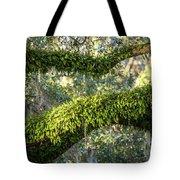 Ferns On Live Oak Tote Bag