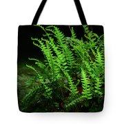 Ferns On The West Virginia At Tote Bag