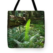 Ferns Sunlit Redwood Forest Fern Giclee Art Prints Baslee Troutman Tote Bag