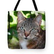 Ferocious Cat Tote Bag