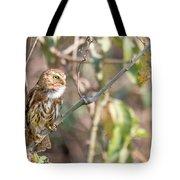 Ferruginous Pygmy-owl Tote Bag
